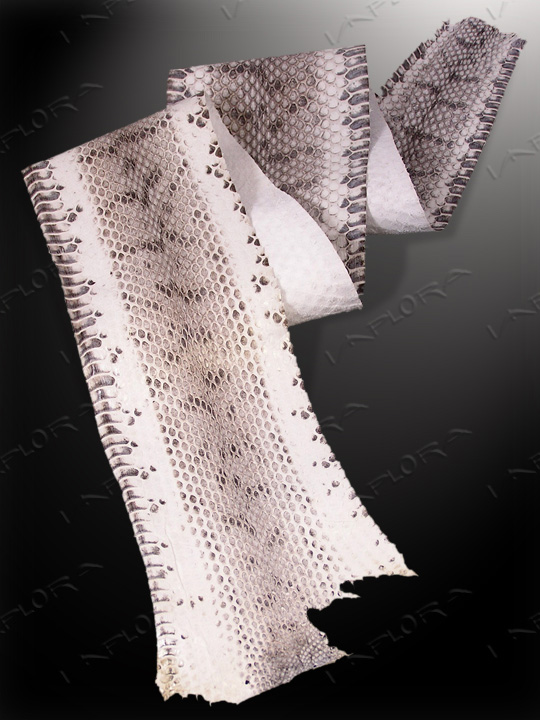 Snakeskins Implora Natural  Dog-Faced Snake Skin