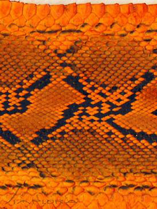 Snakeskins Implora Orange Python Snakeskin