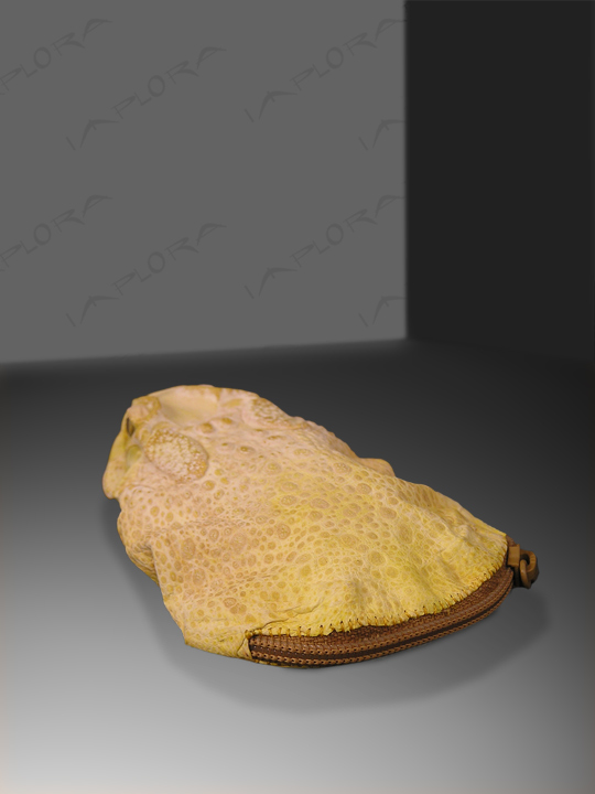 Implora Yellow Frog Skin Coin Pouch Wallet