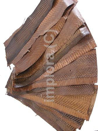 Snakeskins Mixed Brown Cobra Snake Skin Scraps