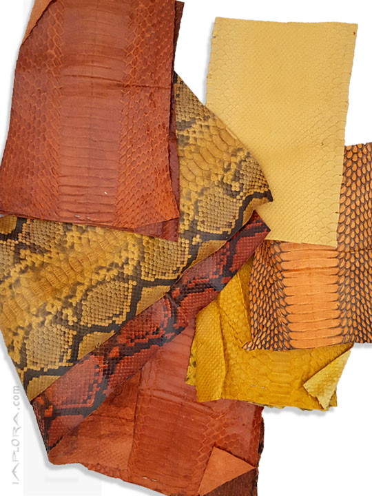 Snakeskins  Snake Skin Scraps Pieces Assorted Yellow Orange