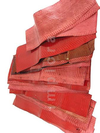 Snakeskins Snake Skin Scraps Pieces Assorted Red