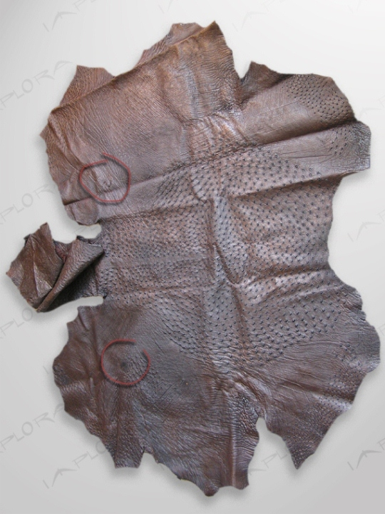 Ostrich Leathers Implora Ostrich Skin Dark Brown 68x58 in
