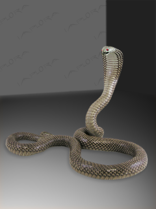 Snakeskins Asian Spitting Cobra Strike Taxidermy Mount