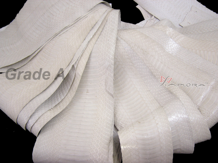 Snakeskins Implora Off-White Cobra Snake Skin Hide Belly