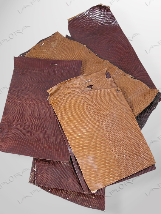 Lizard Skins Brown Monitor Lizard Skin Scraps