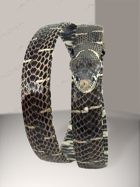 Snakeskins Implora Natural Mangrove Head Snake Belt